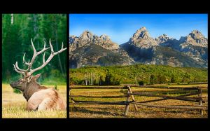 c14-Elk and Tetons.jpg